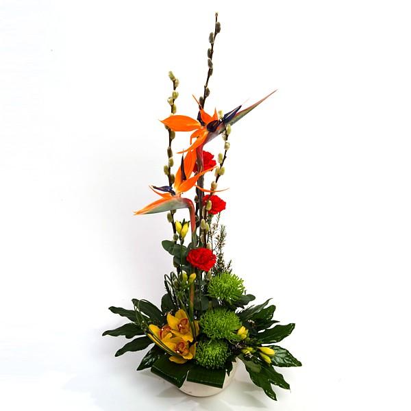 Bird Of Paradise Irish Florist Bray Supplying Dublin